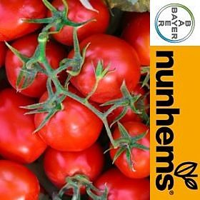 Tomate Industria FOKKER F1 Ciclo 118 Dias Fruto 65-70 Grs
